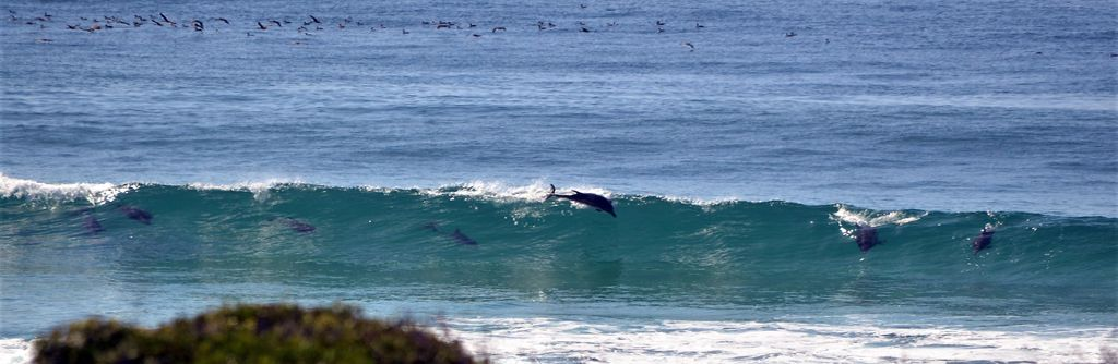 Dolphins view 2